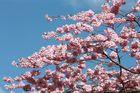 Blütenpracht II
