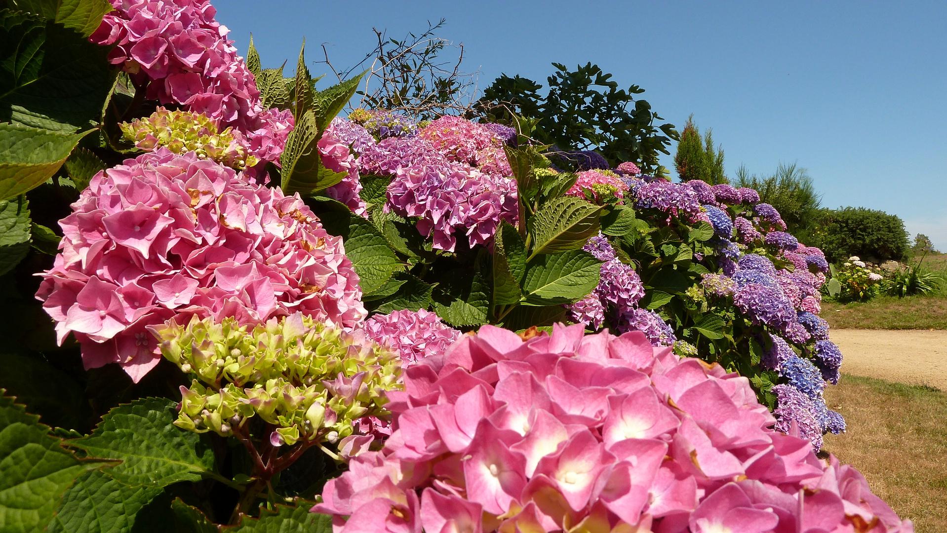 Blütenpracht im Finistére