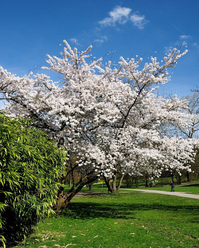 Blütenpracht im Grütt z´Lörrach 1a.