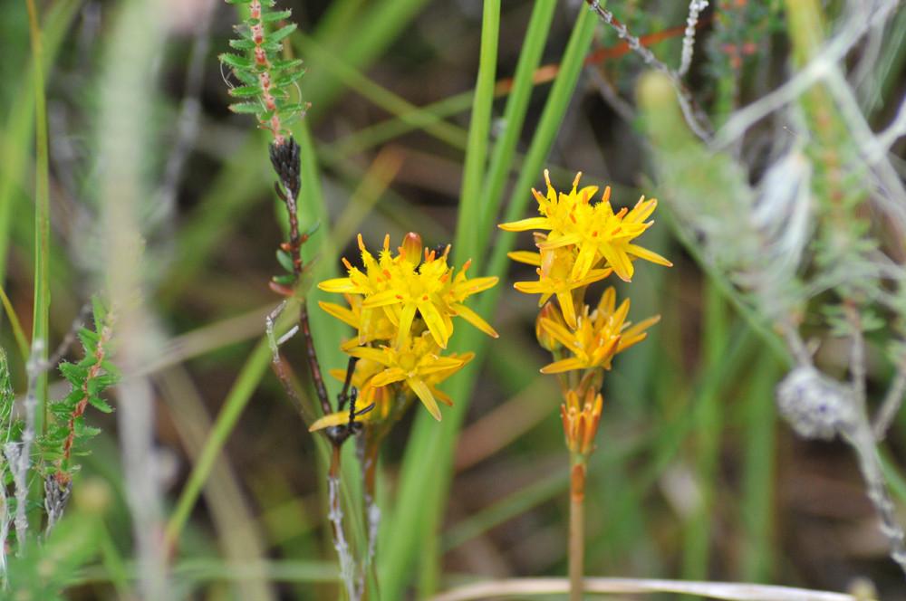 Blütenpracht in den Highlands von Schottland