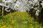 Blütenpracht in der Frühlingssonne