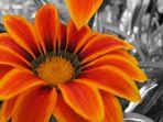 Blütenpracht in grauer Welt