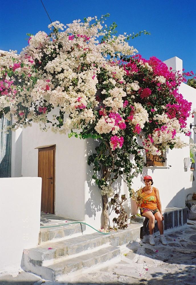 Blütenpracht in Lefkes/Paros /Griechenland