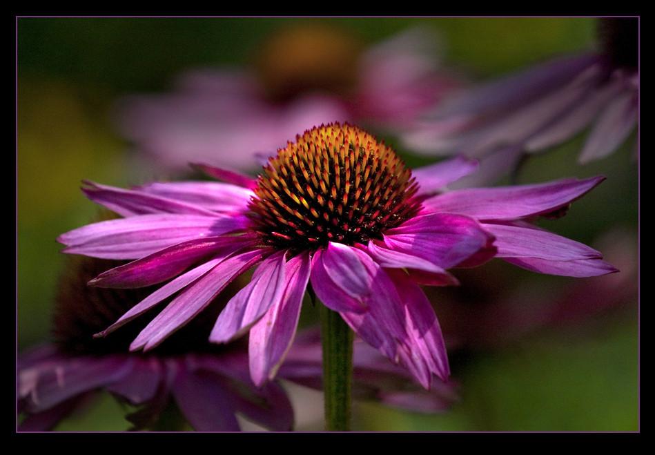 Blütenpracht in pink...