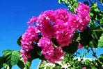 Blütenpracht in Torre Alta 3