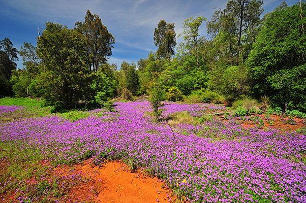 Blütenpracht, Queensland, Australien