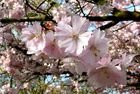 Blütenpracht zu Ostern