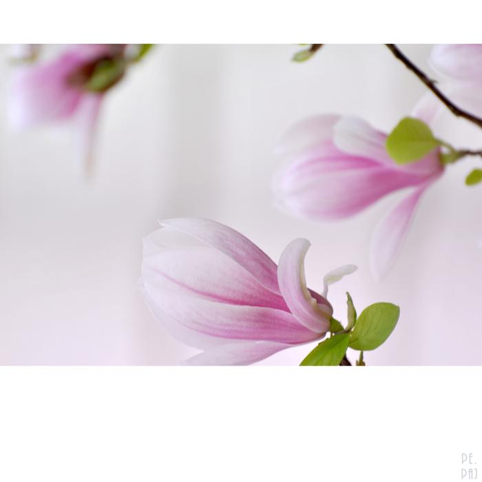 blütenpräsenzen 2
