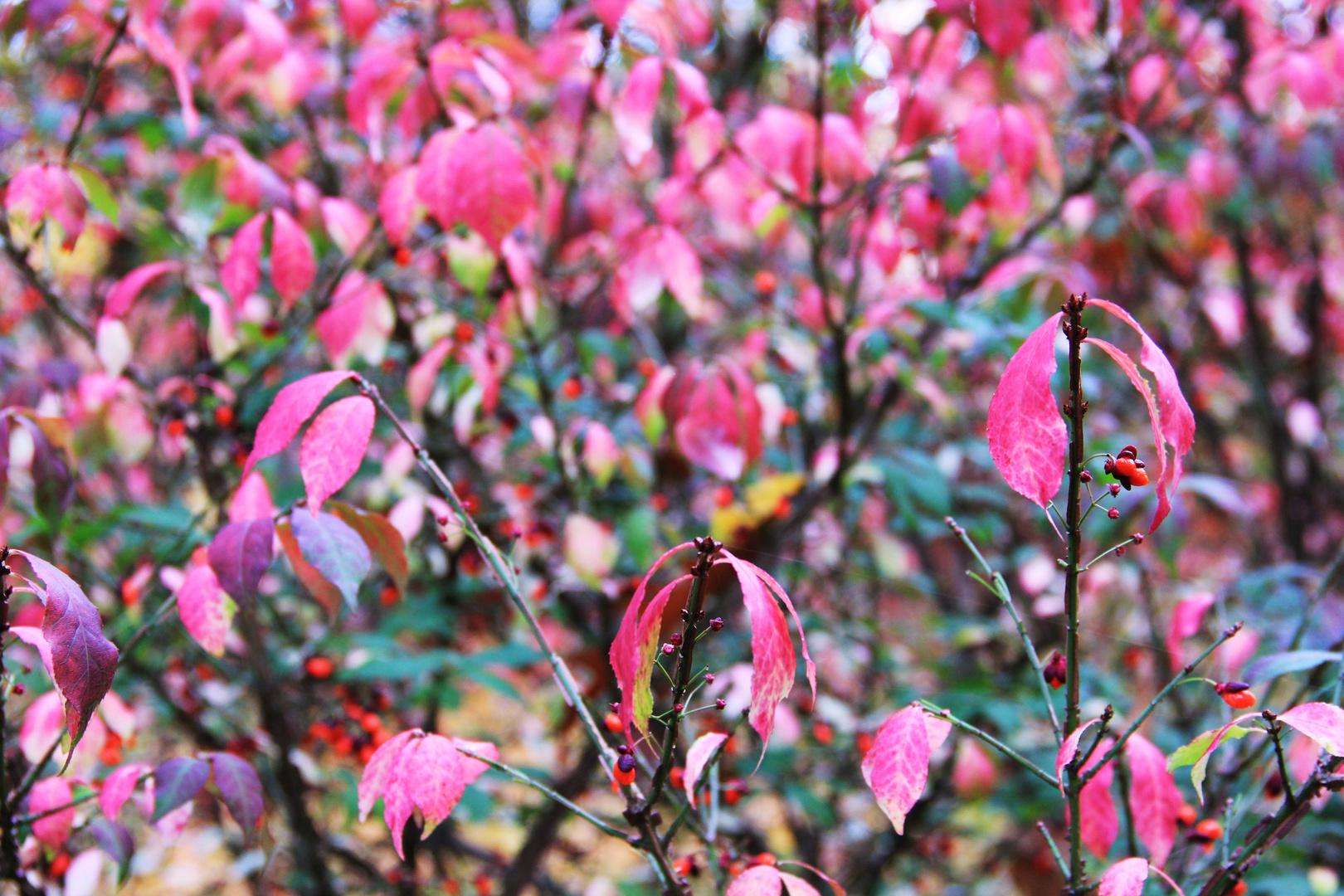 Blütenrausch im Herbstpark