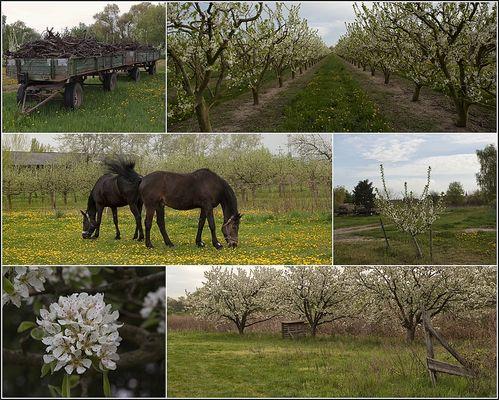Blütenrausch in der Pfalz.....