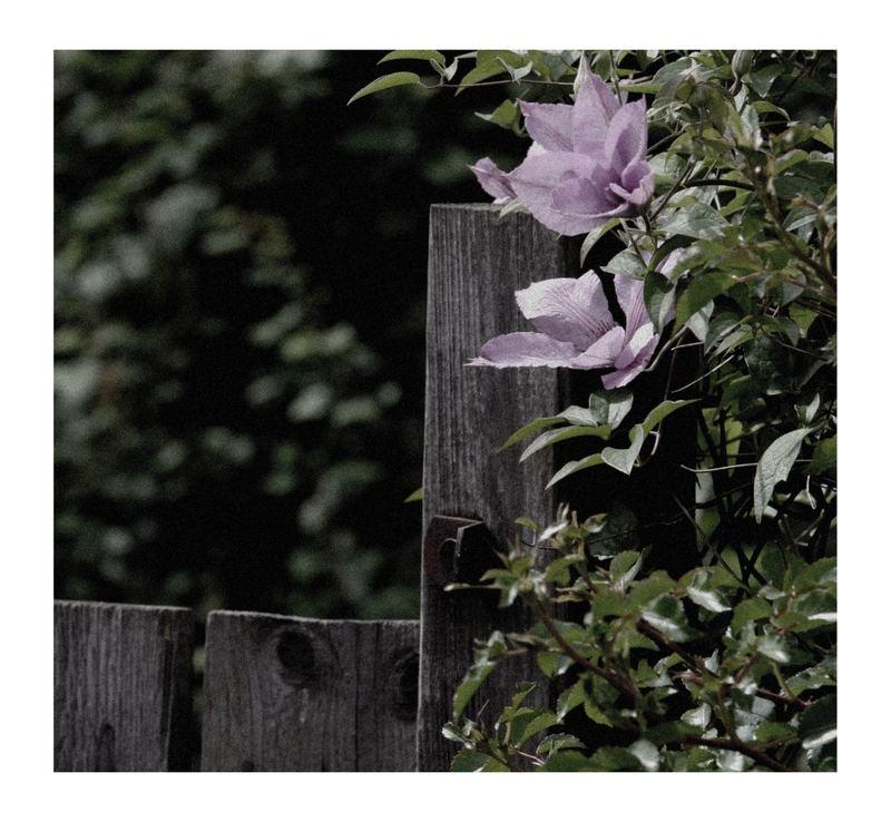 Blütenrausch(en) :)