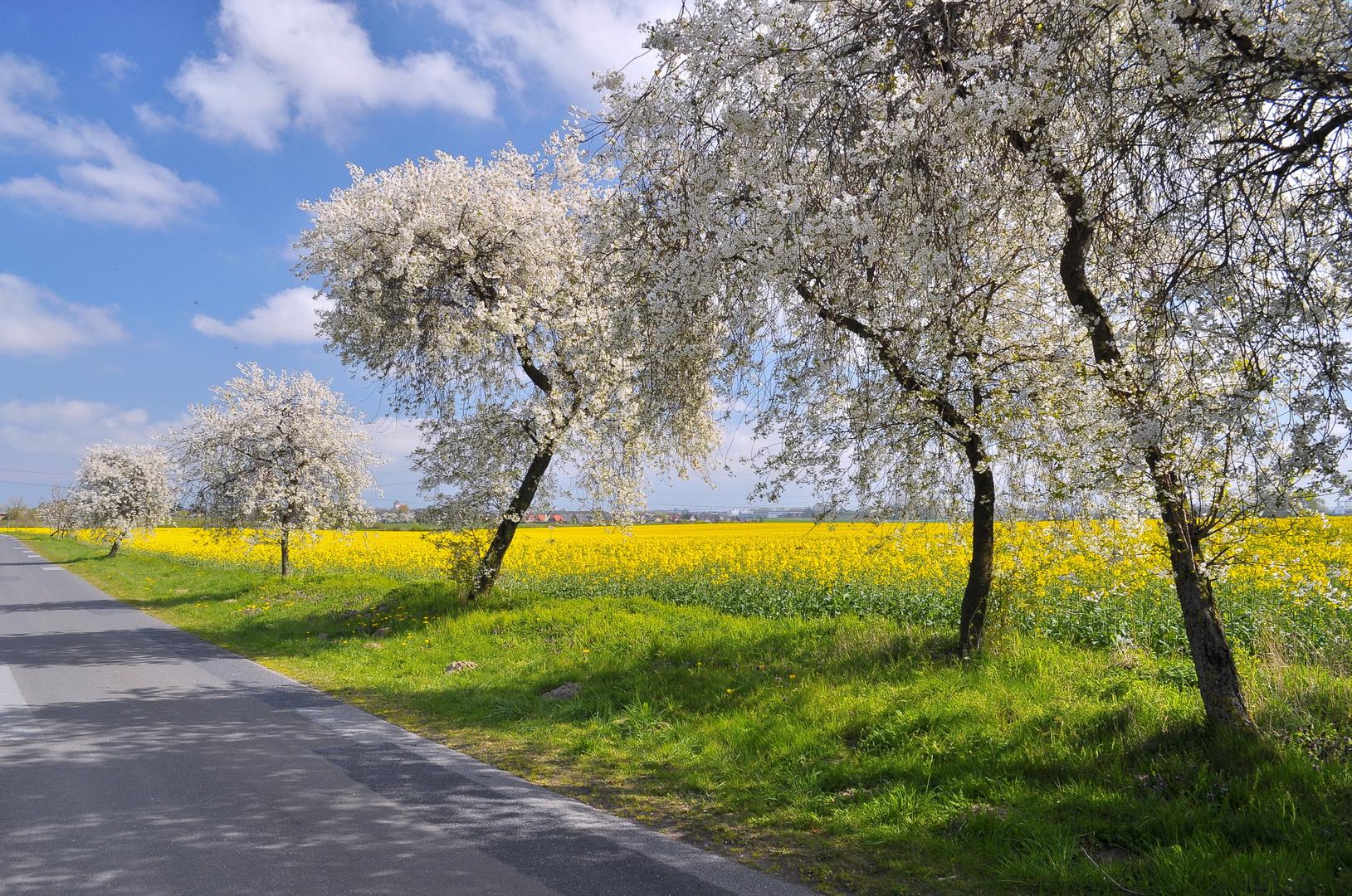 Blütenreich - typisch Frühling in Mecklenburg- Vorpommern
