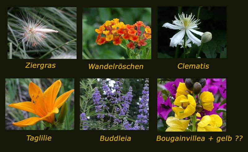 Blütenrundgang - in Hohenheim