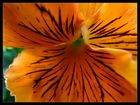 Blütensamba