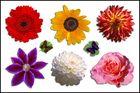 Blütensammlung