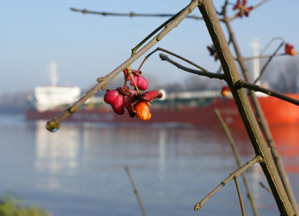 BlütenSchiff