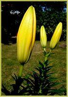 Blütenschlaf