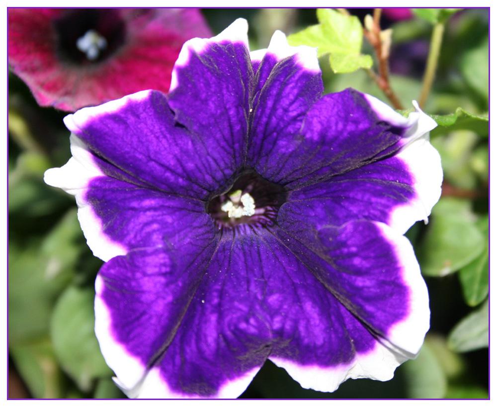 Blütenschmuck