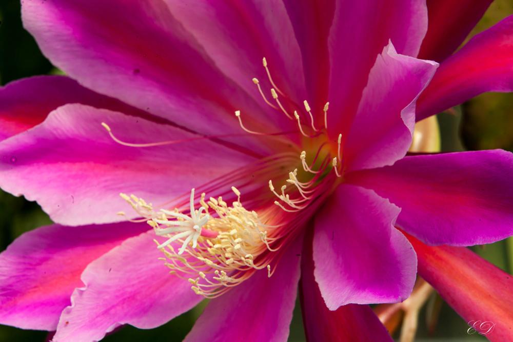 Blütenschönheit
