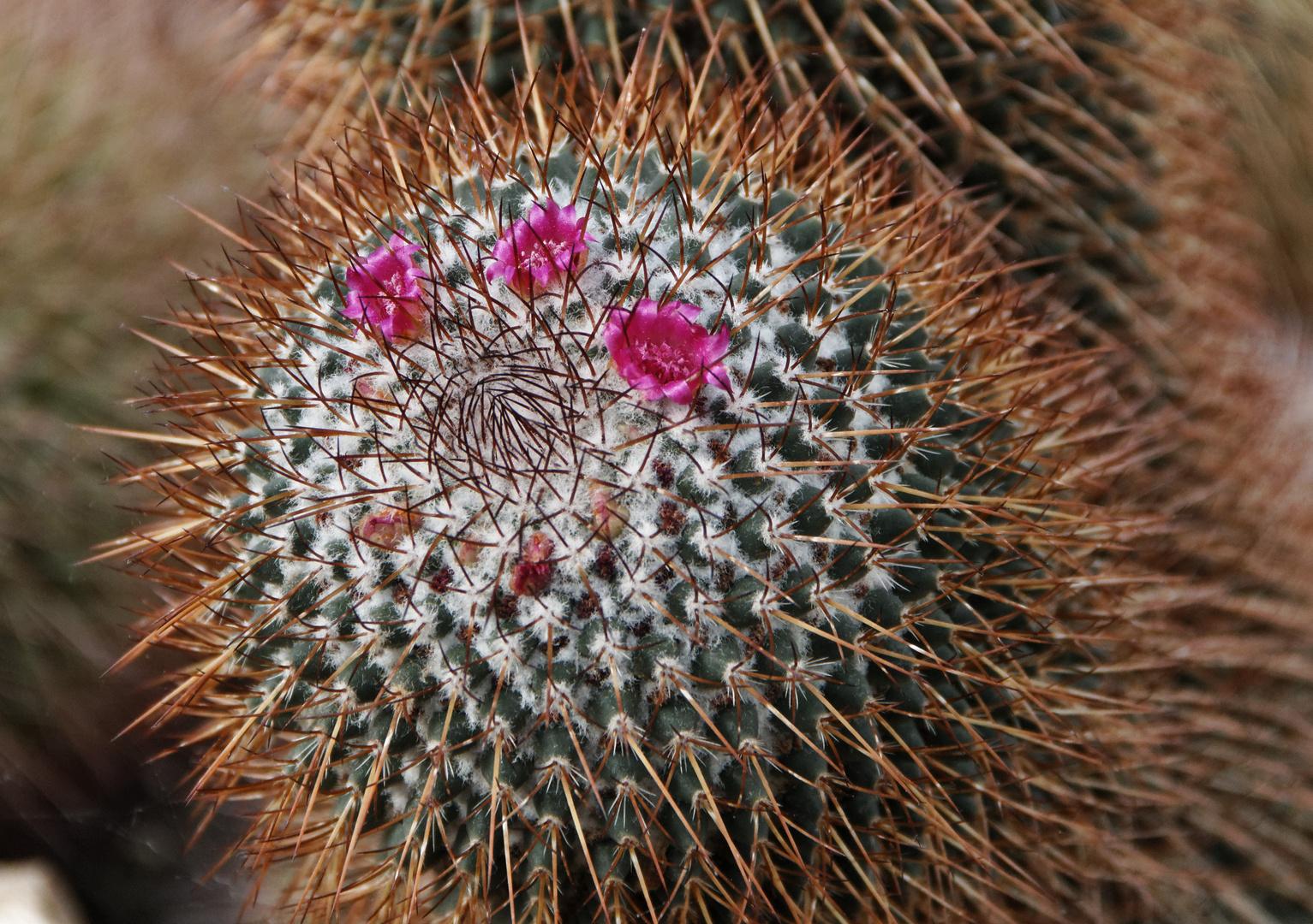 Blütenschutz aus Stacheln