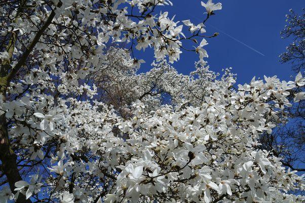 Blütenschwärme