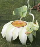 Blütensessel