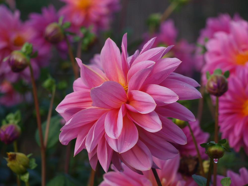 Blütenspaß :-)