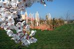 Blütenspielplatz