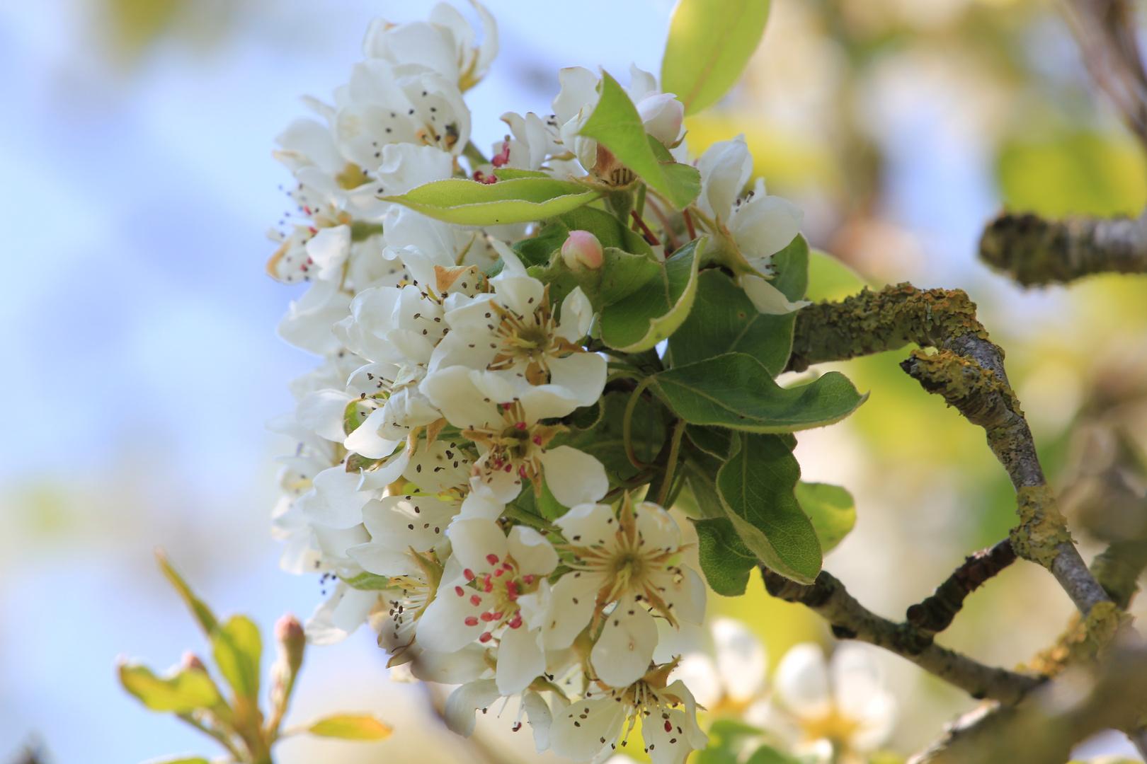 Blütenstab