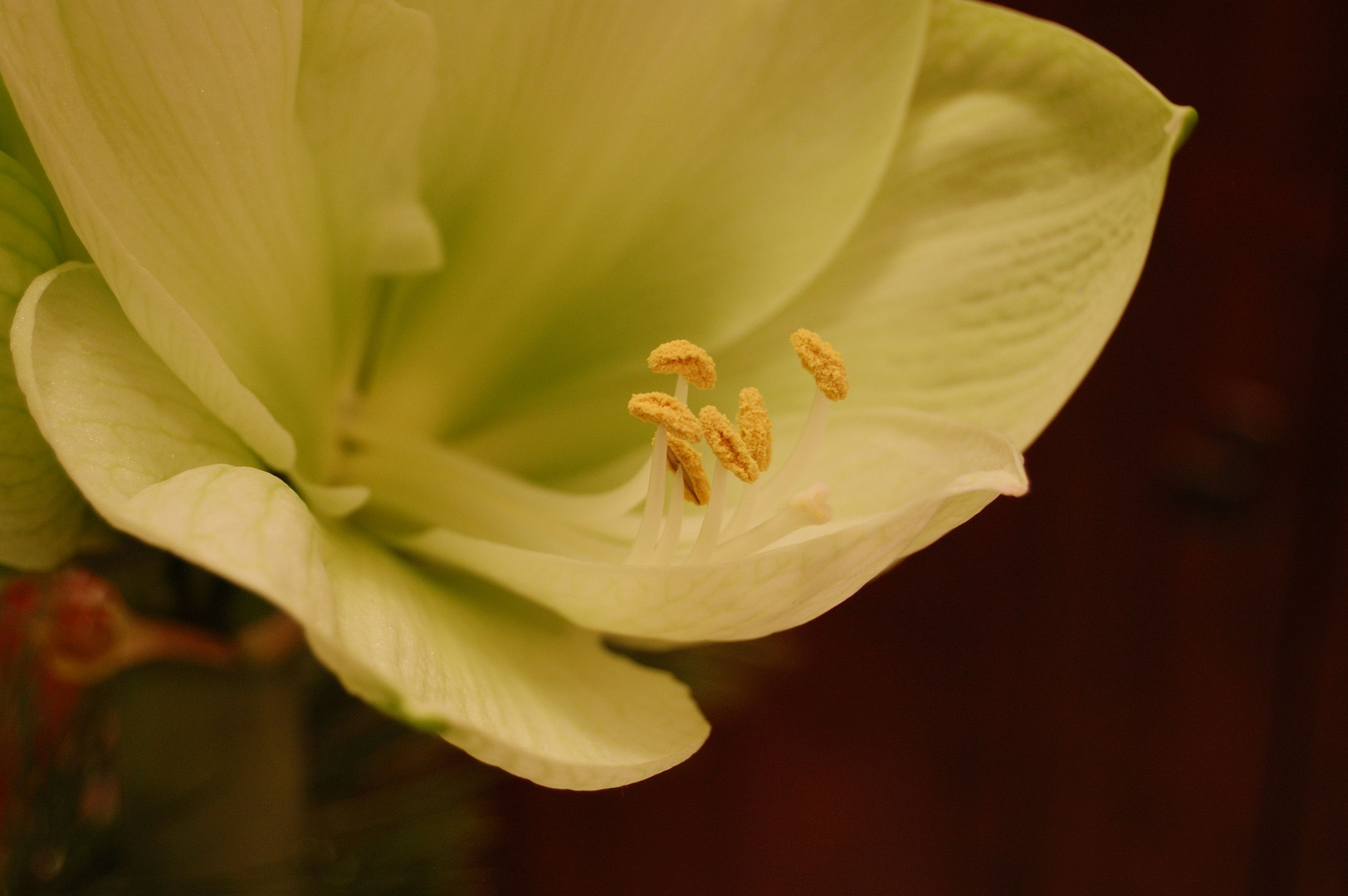 Blütenstand