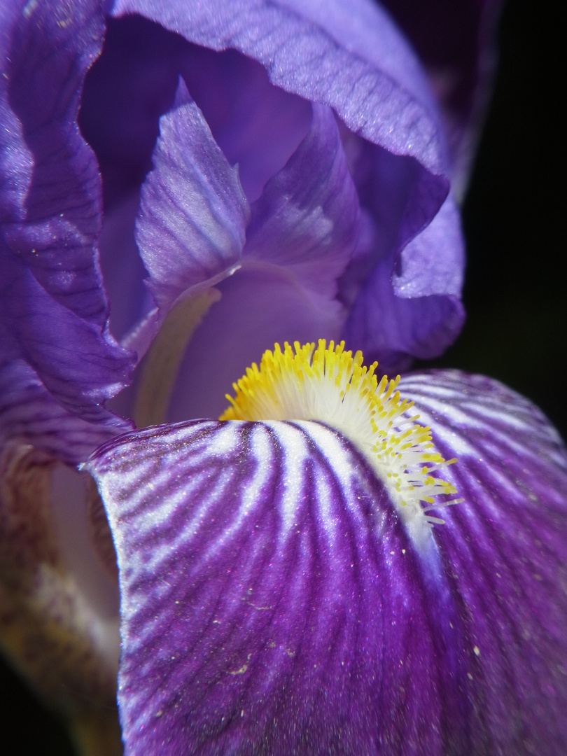 """""""Blütenstaub"""""""