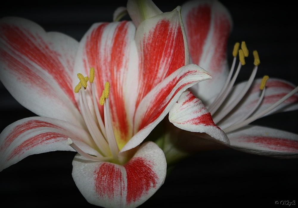 Blütenstaub III