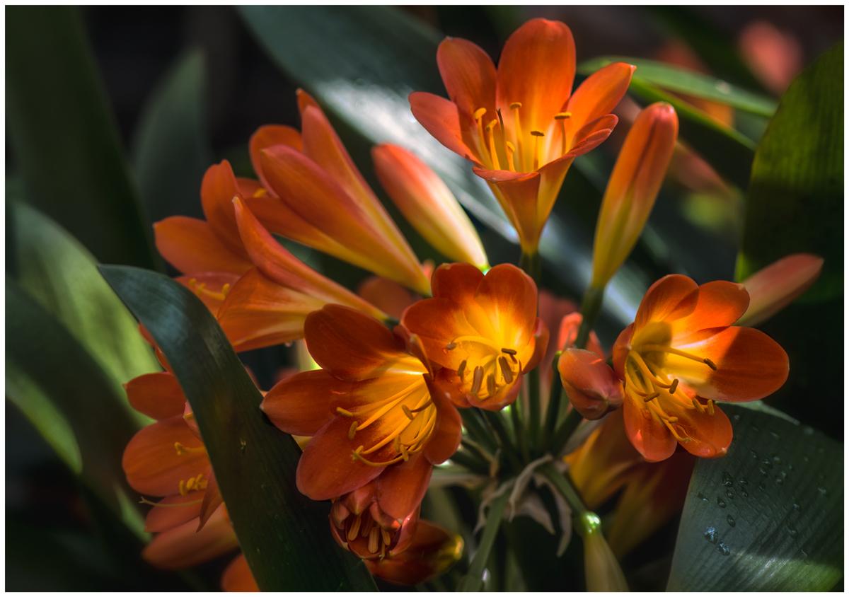 Blütenstempelchen