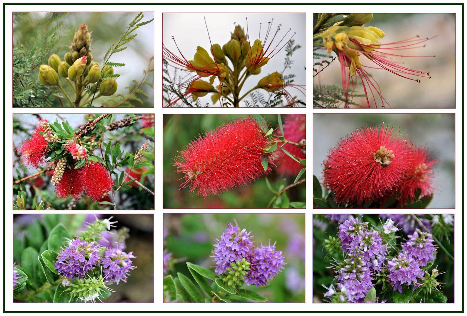 Blütensträucher...