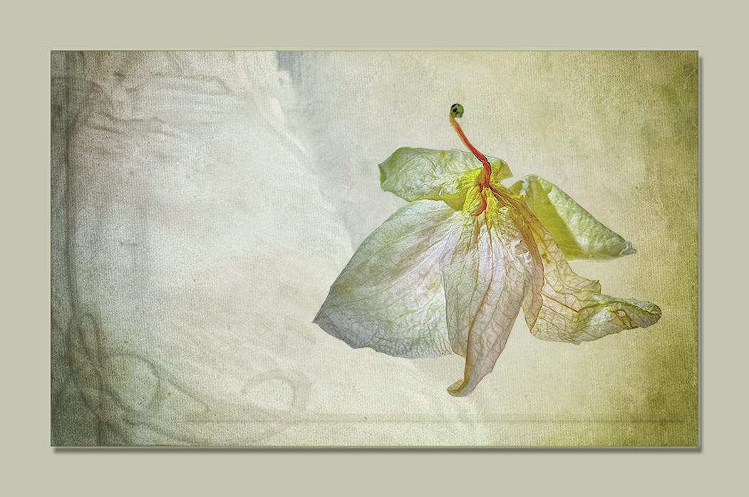 Blütentanz (2)
