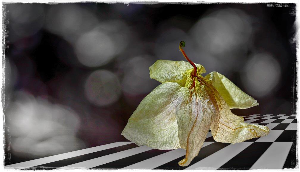 Blütentanz (3)