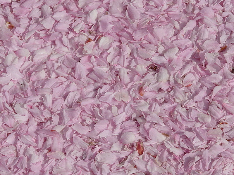 Blütenteppich