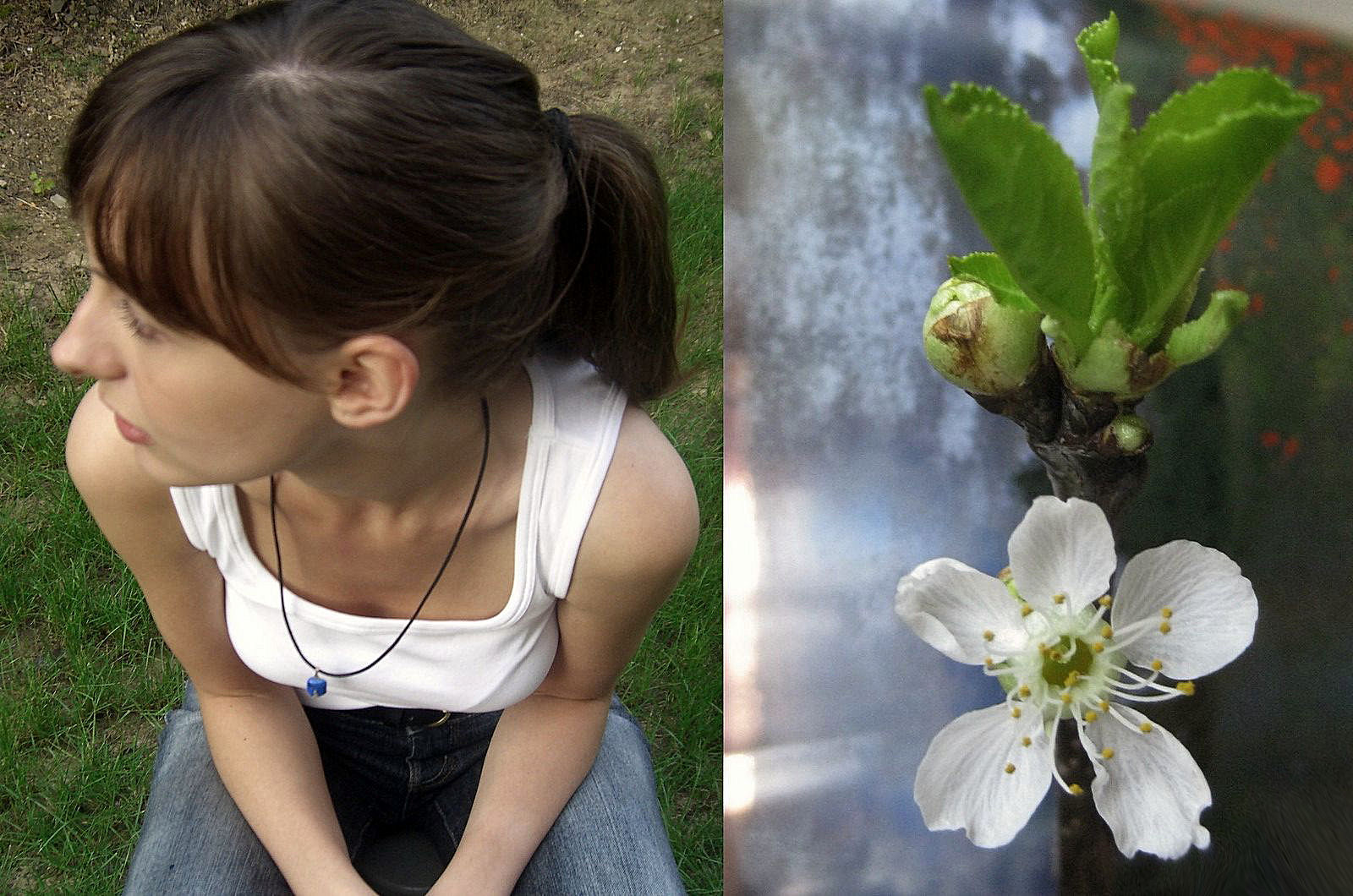 Blütenträume ...