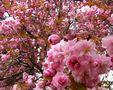 Blütenträume von Angelica Hofmann