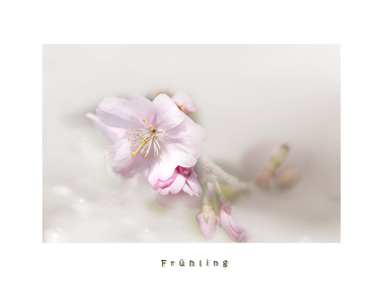 Blütenträume....