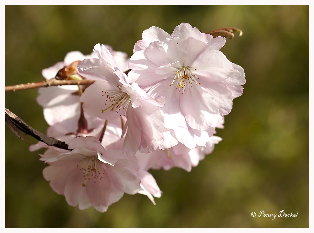 *Blütenträume*