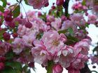 Blütenträume in Rosa