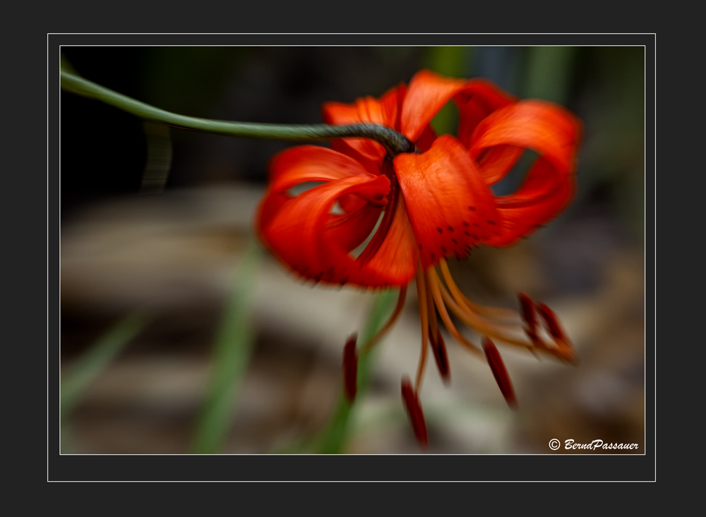 Blütenträume_1