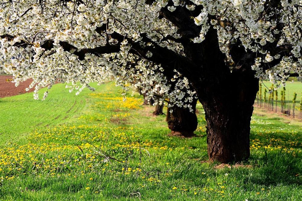 Blütenträume_no.1