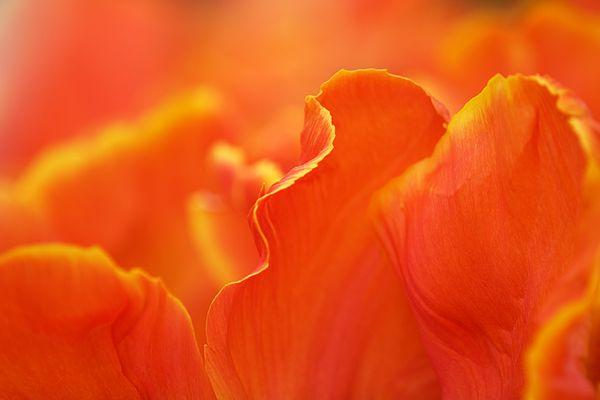 Blütenträumerei
