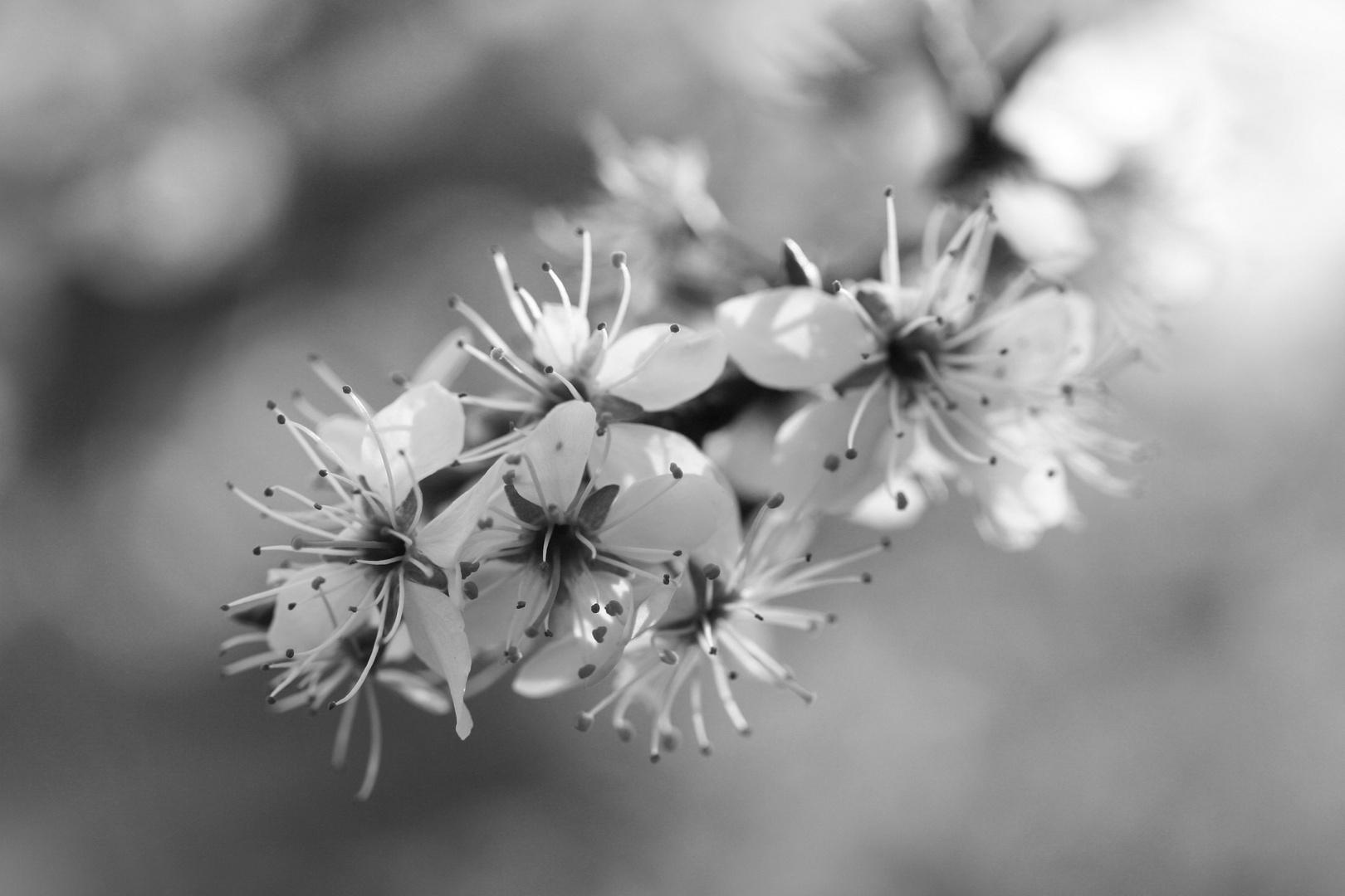 Blütentraum :-)