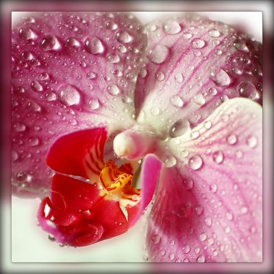 - Blütentraum -