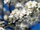 Blütentraum-Baum (2)
