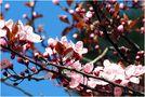 Blütentraum-Baum von Birgit Presser