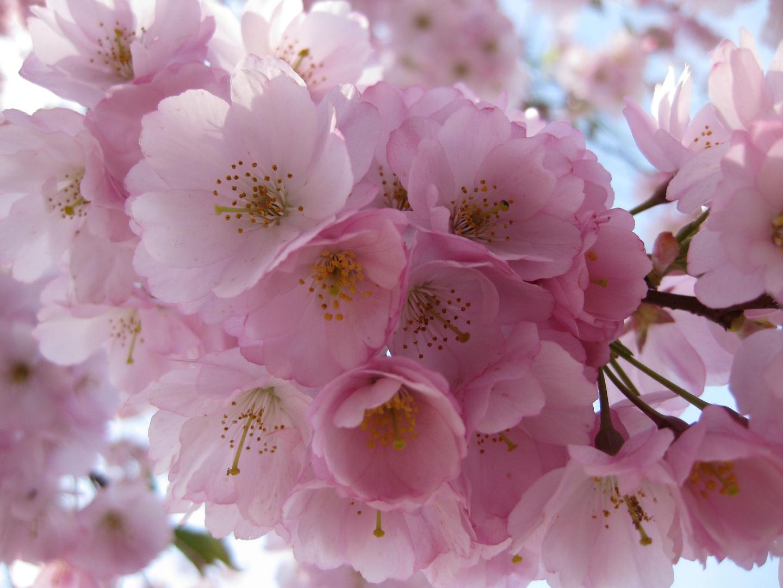 Blütentraum - ein Traum von Blüten